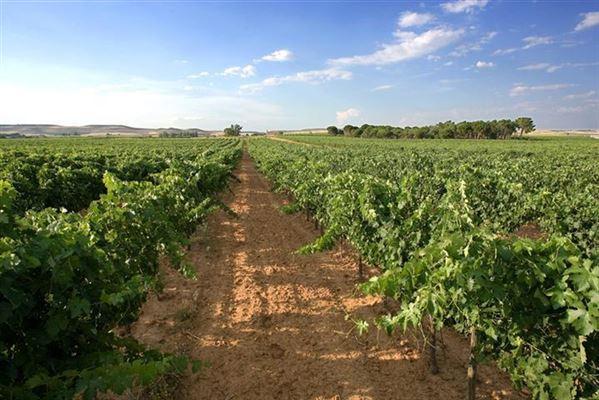 Operating vineyard with stunning surroundings spain for Soil xchange