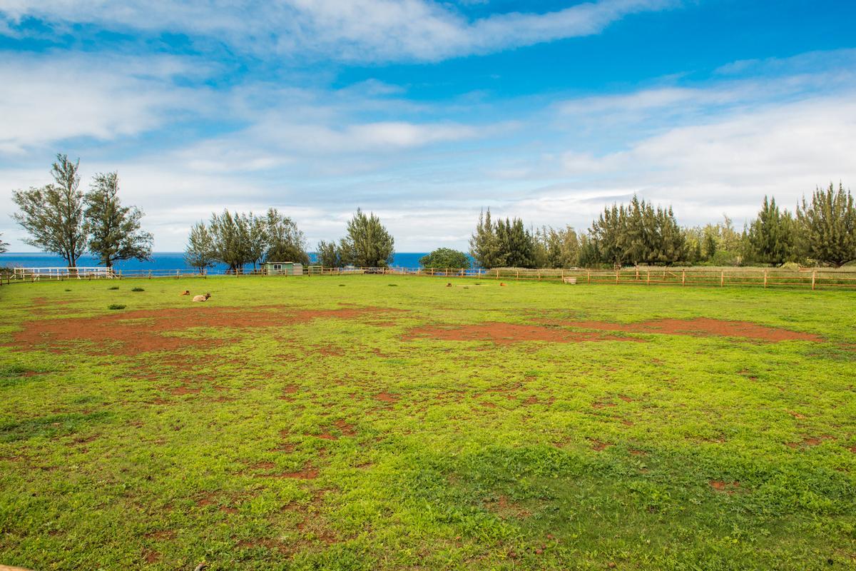 Kauapea Road, Kilauea, HI - USA (photo 4)