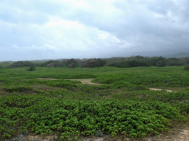 165 Acre Legacy Property On Oahu North Shore Hawaii