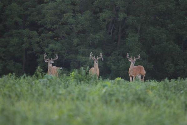 Epic 900 Acre Wildlife Sanctuary luxury homes