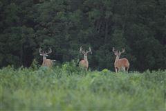 Epic 900 Acre Wildlife Sanctuary mansions