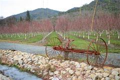 Luxury homes in Gorgeous vineyard property