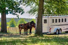 Luxury properties Lovely horse farm