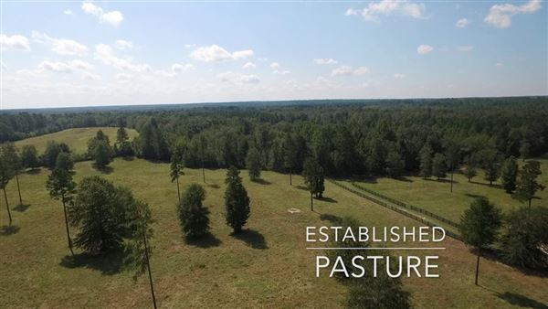 Mansions Dream acreage for your southern country retreat