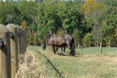 Luxury real estate 142-plus acre farm with three custom homes