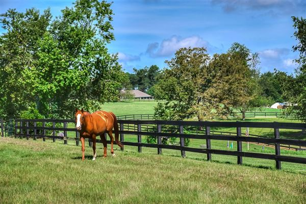Luxury real estate  turnkey equestrian property
