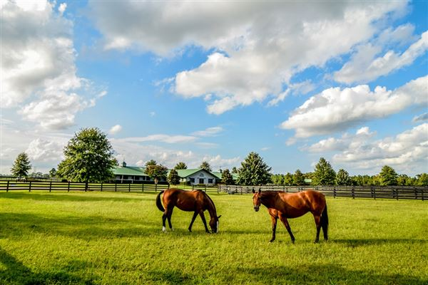 equestrian paradise luxury homes