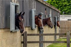 Luxury real estate Stunning barn conversion with excellent equestrian facilities and 40 acres