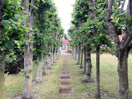 Appletree mansions