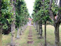 Mansions Appletree