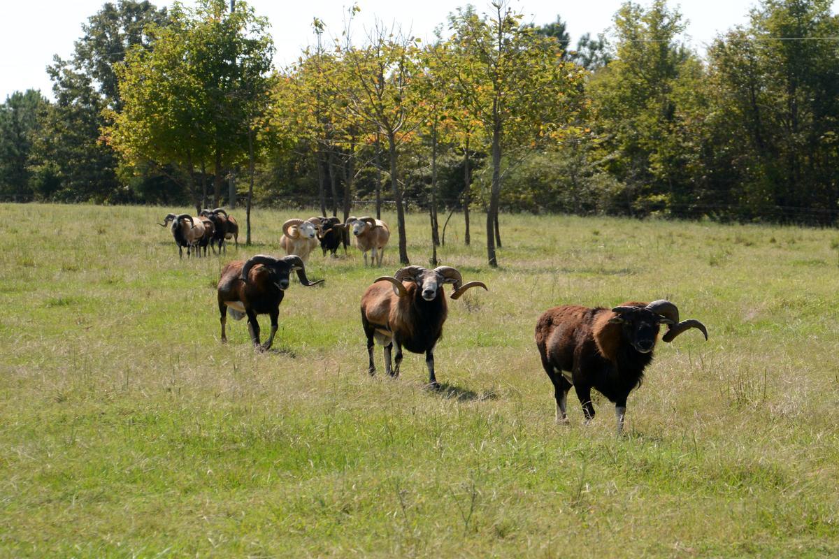 Huckleberry Farm luxury properties