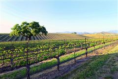 Luxury homes in AWARD-WINNING Vogelzang Vineyard