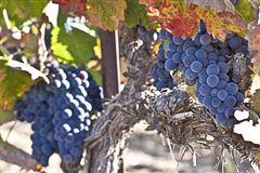 Mansions in AWARD-WINNING Vogelzang Vineyard