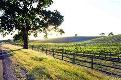 AWARD-WINNING Vogelzang Vineyard mansions