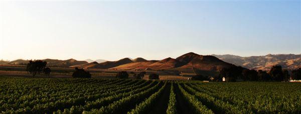 Luxury properties AWARD-WINNING Vogelzang Vineyard