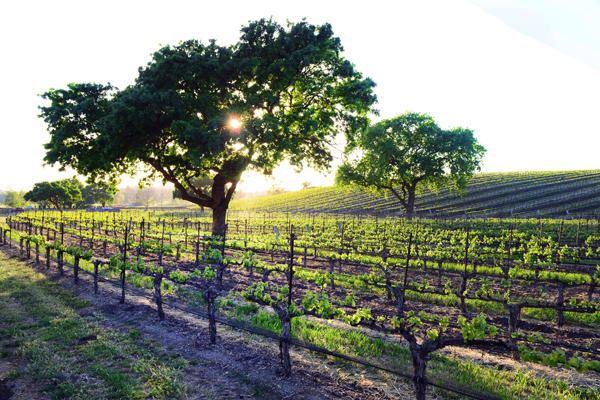 AWARD-WINNING Vogelzang Vineyard luxury properties