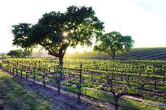 Luxury real estate AWARD-WINNING Vogelzang Vineyard