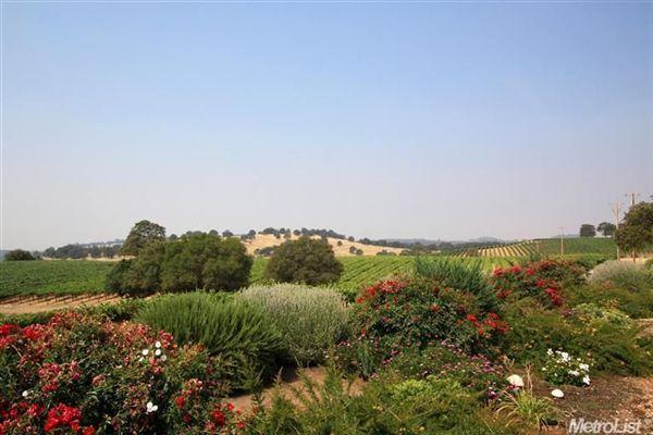 Luxury real estate Luxury Vineyard Estate