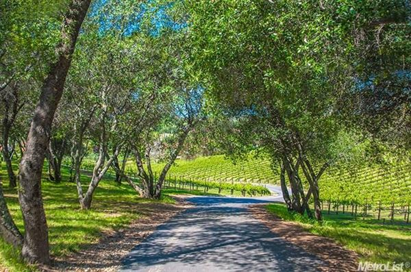 Luxury homes parcel with a vineyard in loomis