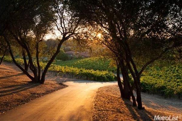 Luxury real estate parcel with a vineyard in loomis