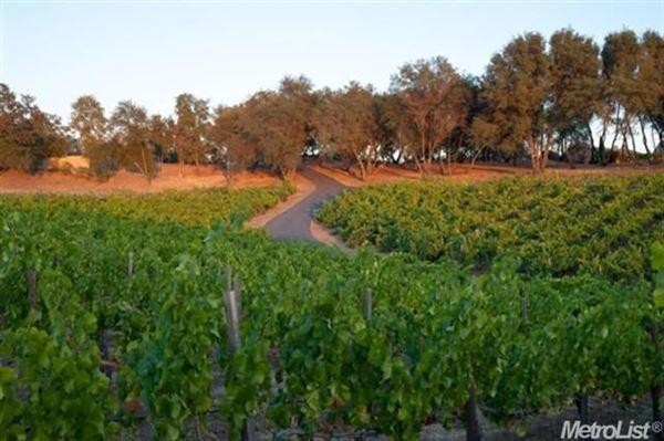 parcel with a vineyard in loomis luxury real estate