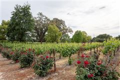 Luxury real estate country property on five acres with vineyard