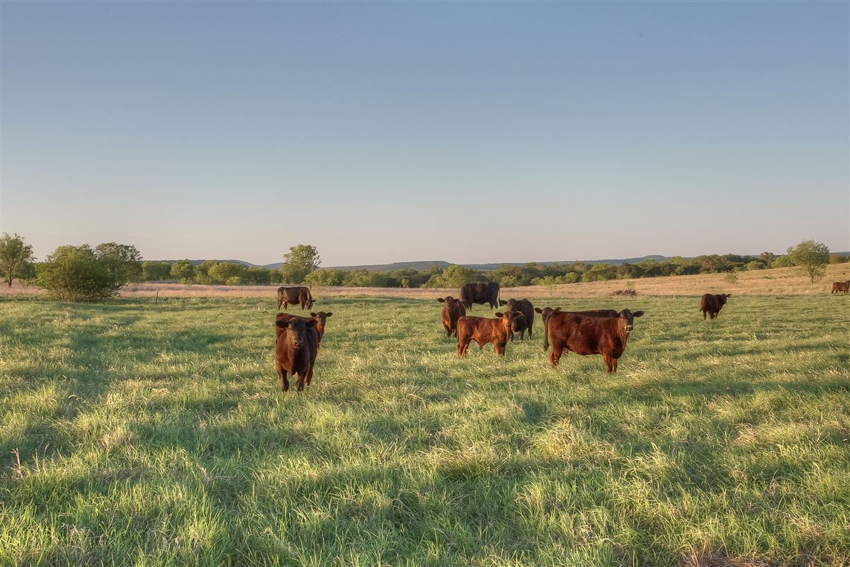 Mansions idyllic Brazos River Valley ranch