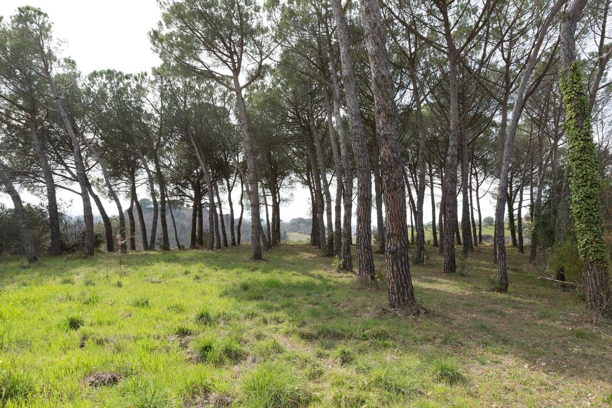 PRESTIGIOUS AGRICULTURAL ESTATE IN TUSCANY luxury properties