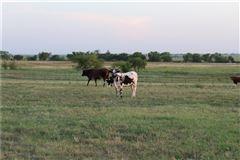 25 acre equine estate luxury properties