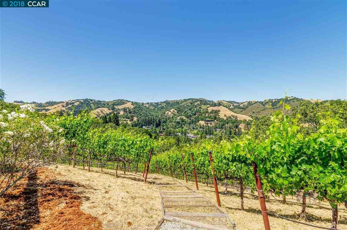 Luxury real estate unique vineyard opportunity