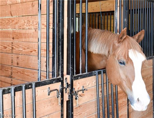 state-of-the-art Equestrian property luxury properties