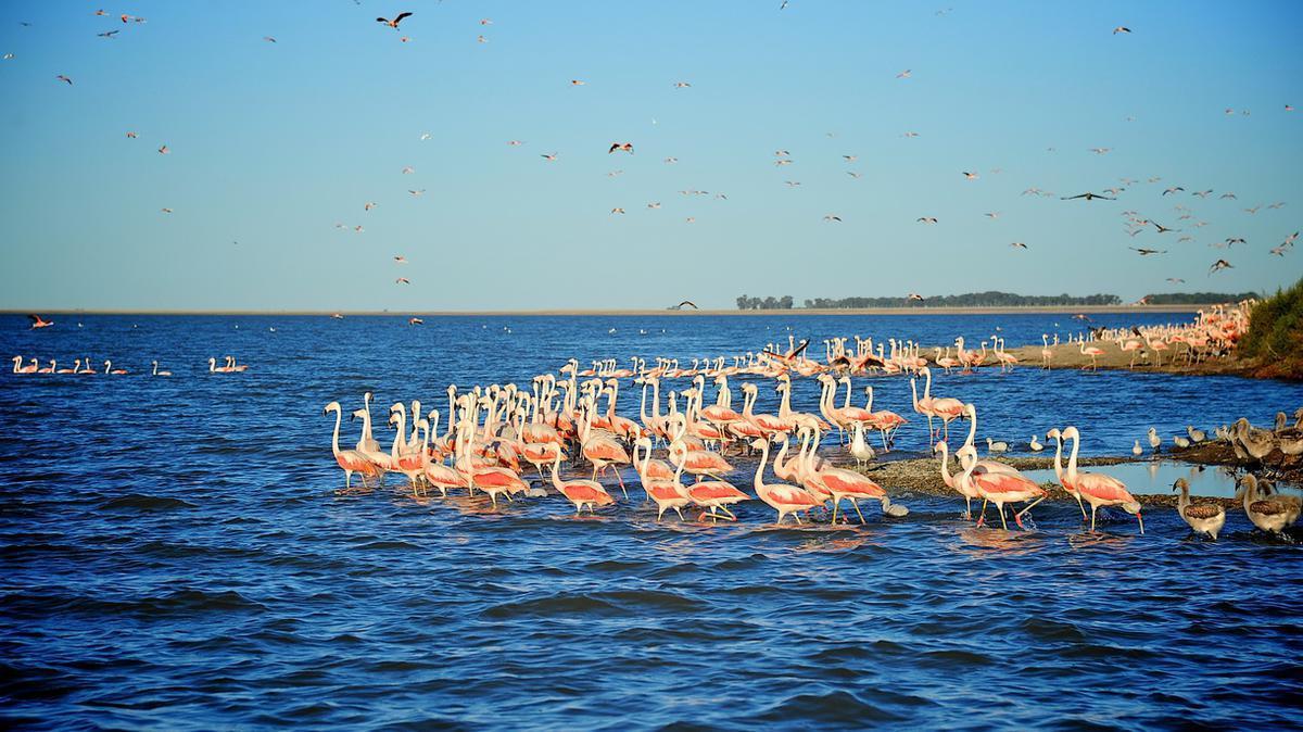 Luxury properties Exclusive island in Laguna del Monte