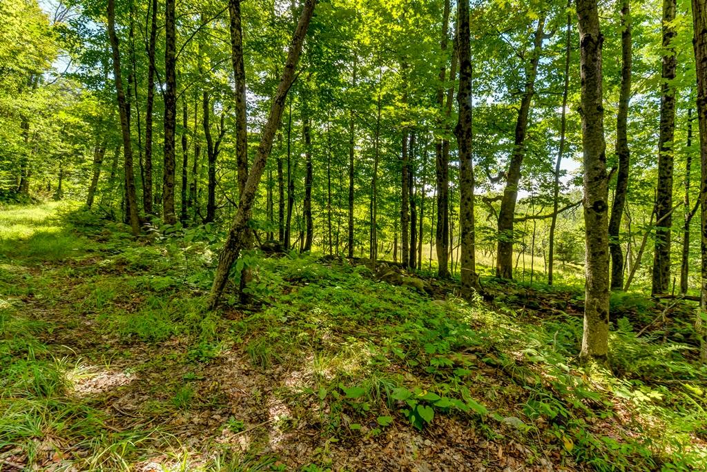 Luxury homes Private Forest on 923 Acres