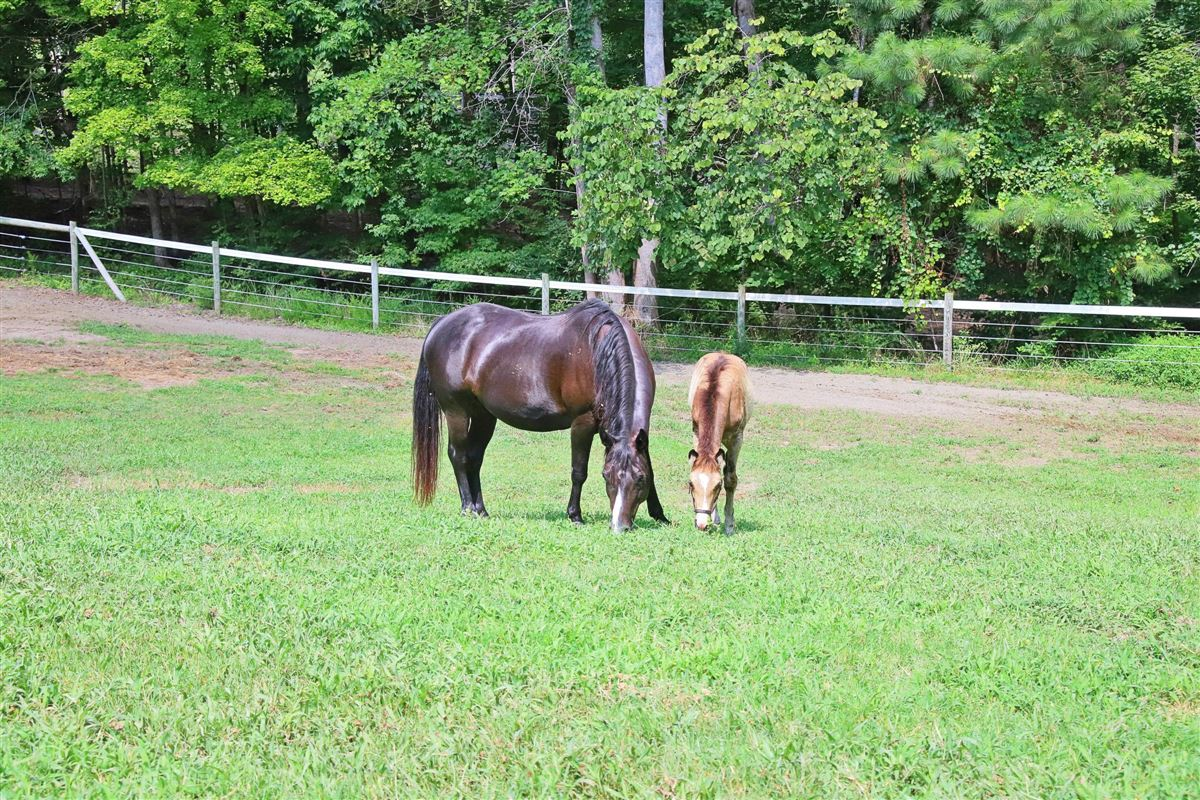 Luxury homes Edelweiss Farm - private residence and world-class equestrian facility