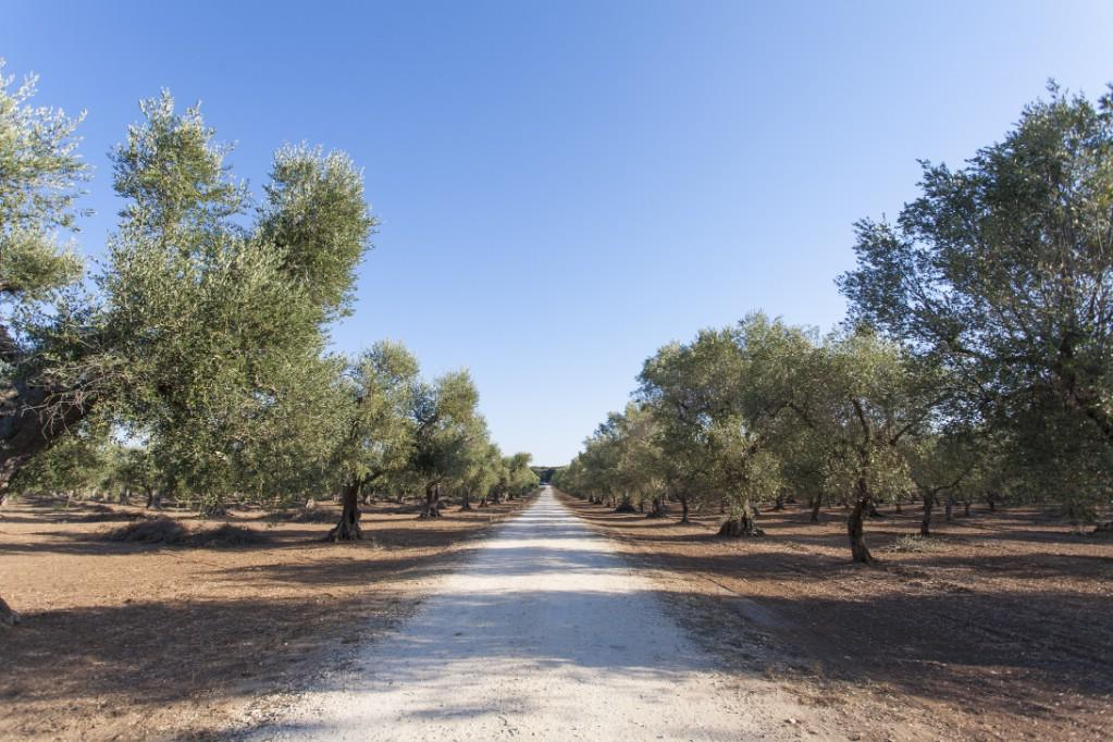 Luxury properties Farmhouse for sale in Puglia