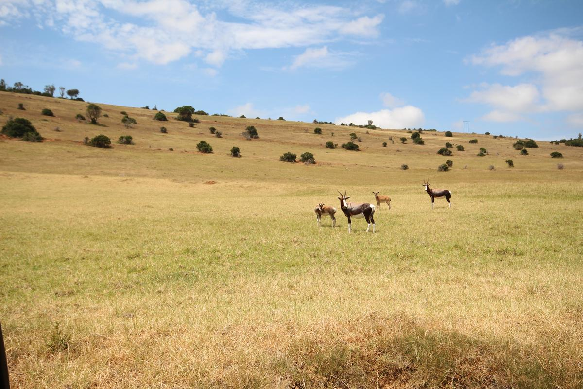 Luxury homes Perfectly Positioned, River Frontage Game Farm