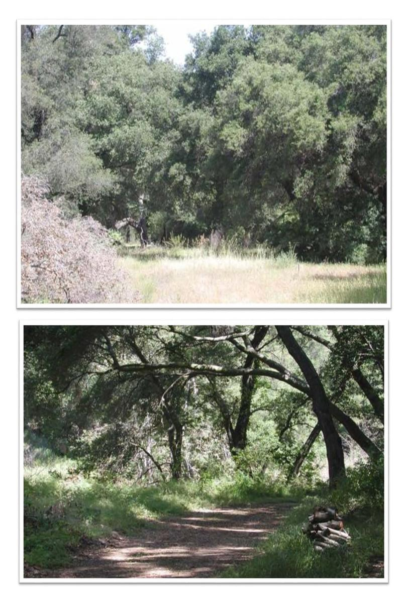 Luxury homes 54 acre parcel at The Preserve