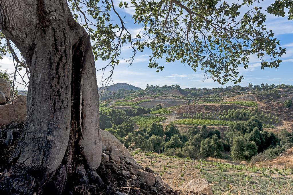 Via Majorca Estate-Vineyard luxury homes