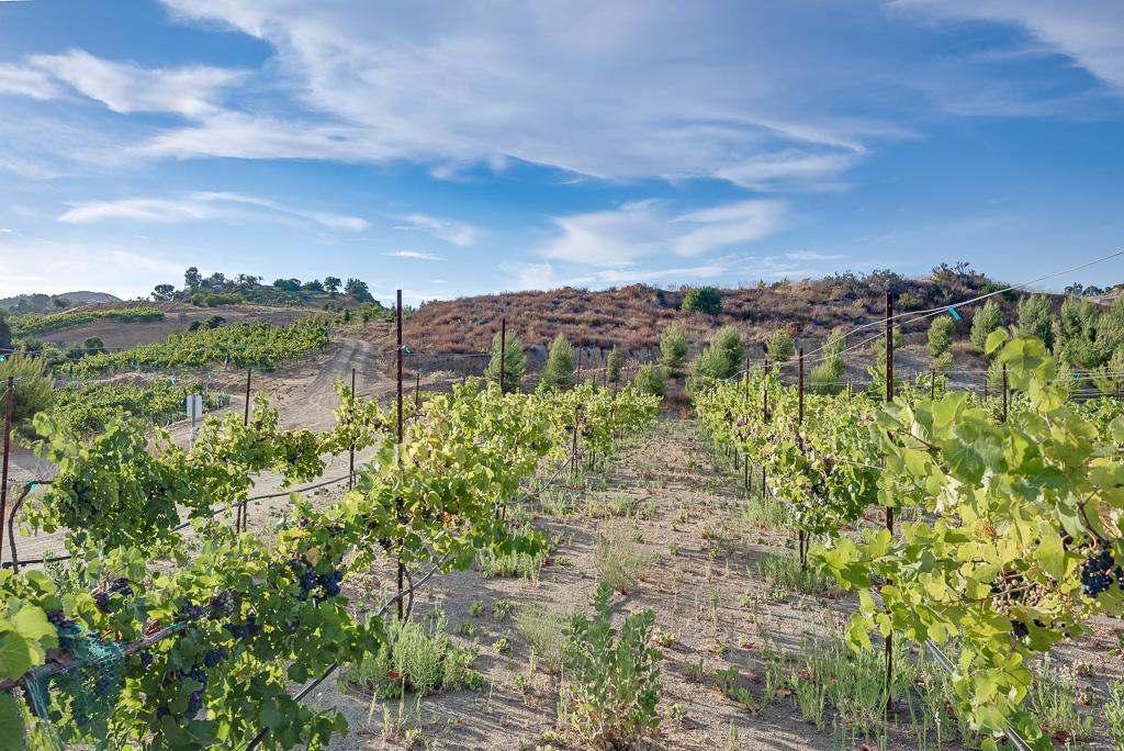 Luxury real estate Via Majorca Estate-Vineyard