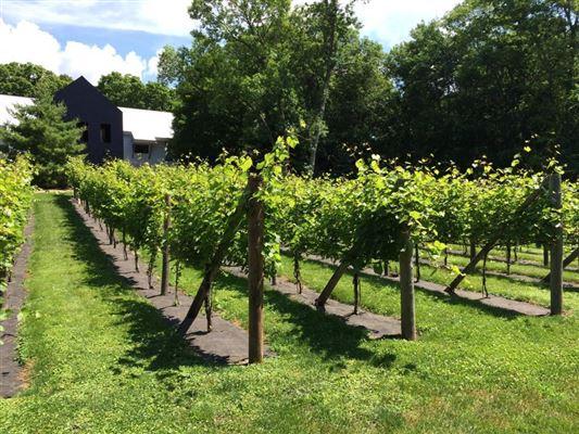 Luxury real estate historical Foxglove Farm site