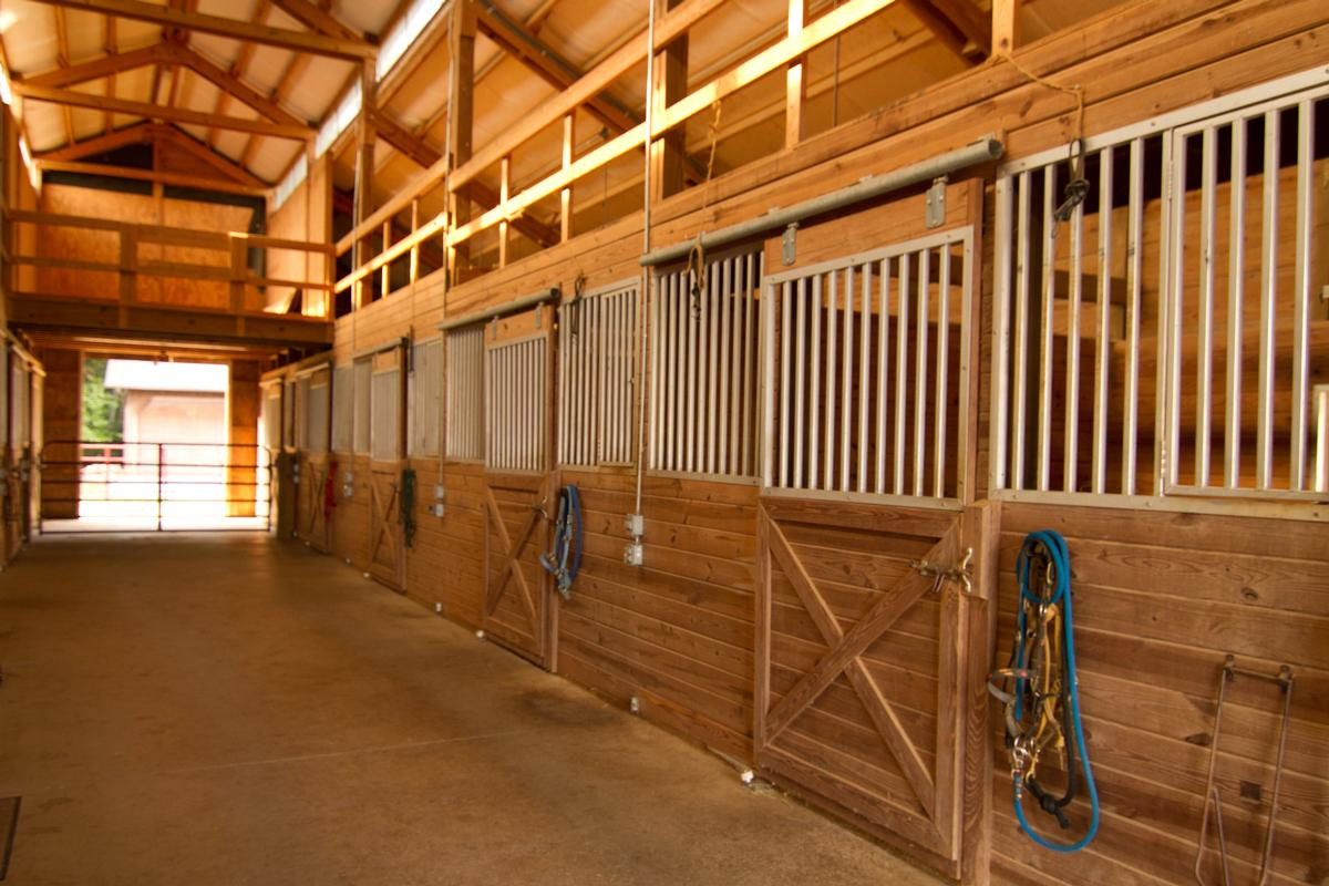 Equestrian Dream mansions