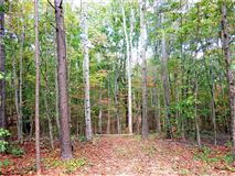 Luxury real estate beautiful wooded tract