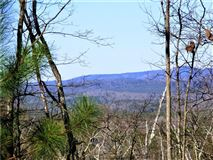 Luxury properties beautiful wooded tract