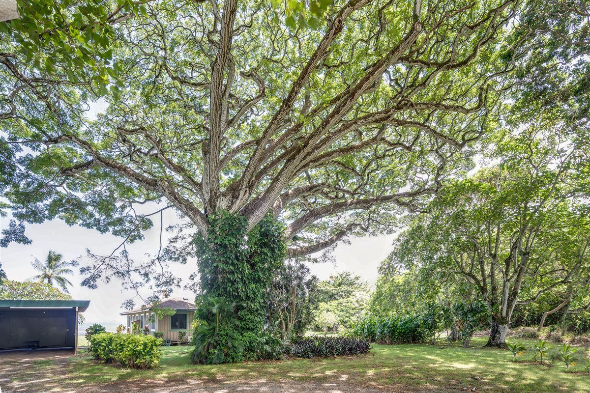 oceanfront property reminiscent of Old Hawaii  luxury properties