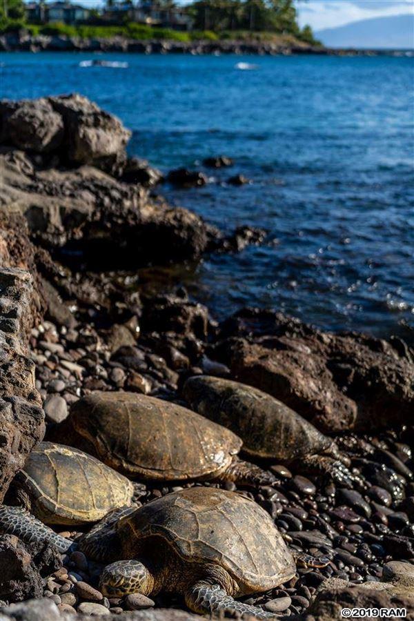 Luxury real estate private portion of West Maui's Kahana coastline