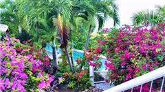Wild Jasmine luxury properties