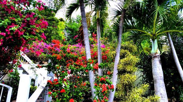 Luxury homes in Wild Jasmine