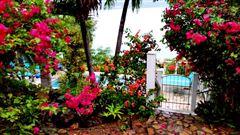 Wild Jasmine mansions